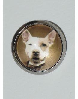 Hond - H2444